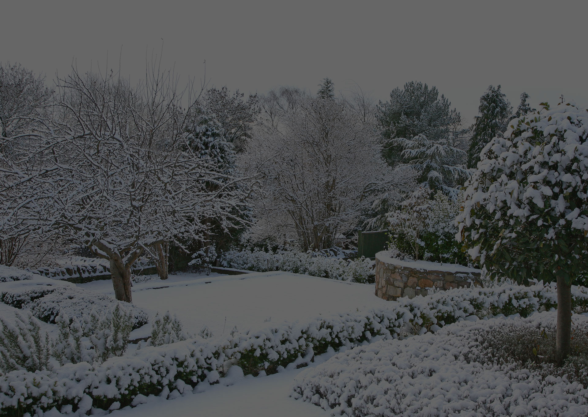 land covered in snow
