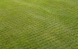 lawn thats been aerated