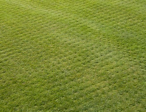 7 Aeration and Overseeding Mistakes to Avoid