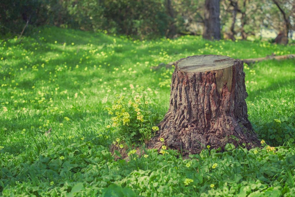 Tree Trunk Stump