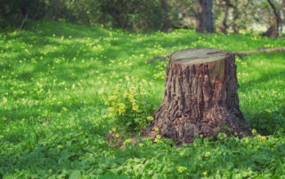 Tree Trunk Stump