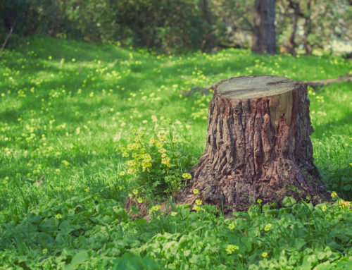 Why You Should Remove A Tree Stump