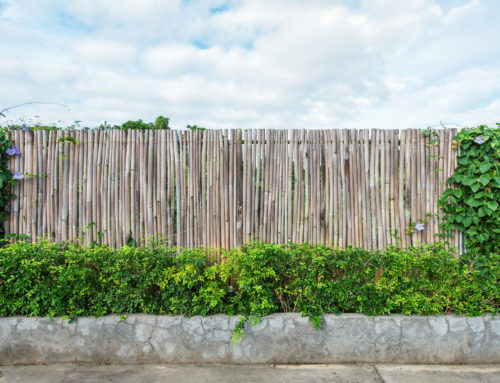 The Best Shrubs For Privacy